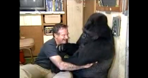 Remembering Robin Williams By Watching His Extraordinary Experience With Koko the Gorilla